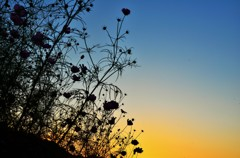 秋桜哀歌ー空の色