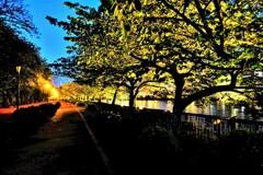 遊歩道の夜