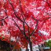 弘前公園の秋-Ⅳ