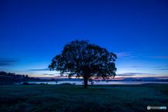 9月の朝にシンボルツリー