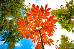 初秋の彩り-Ⅸ