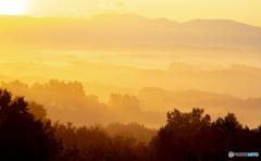 朝陽に包まれる美瑛の丘