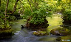 新緑の奥入瀬渓流-Ⅴ