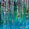 青い池の印象