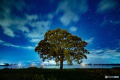 星空のシンボルツリー