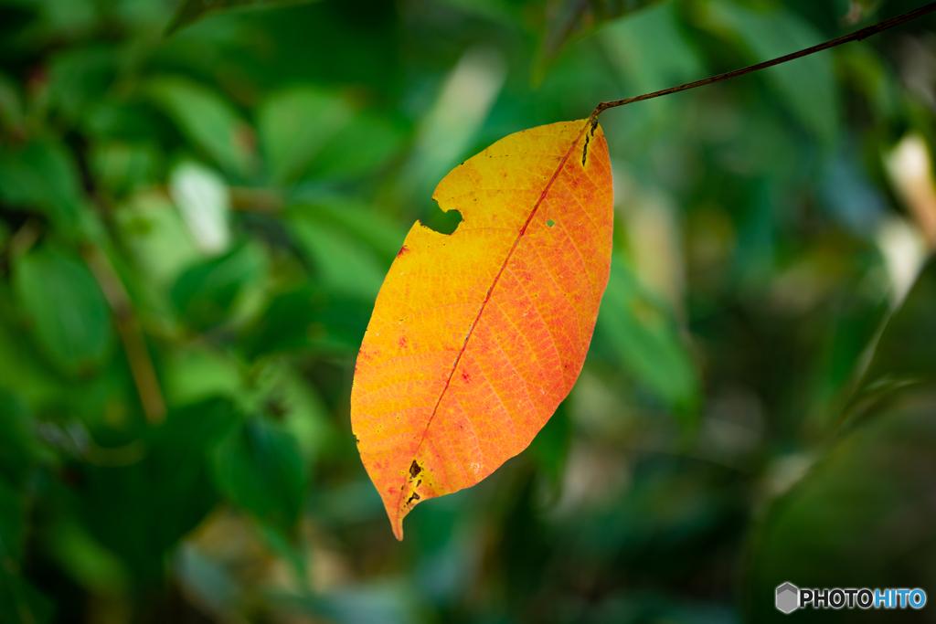 初秋の彩り-Ⅴ