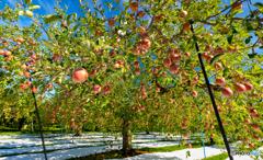 林檎の国から2021-Ⅱ