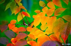 秋の彩り-Ⅰ
