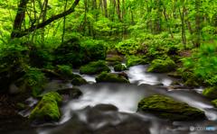新緑の奥入瀬渓流-Ⅳ