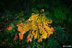 初秋の彩り-Ⅹ