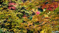 八甲田の秋