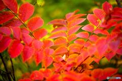 秋の彩り-Ⅱ