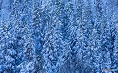 冬模様2018