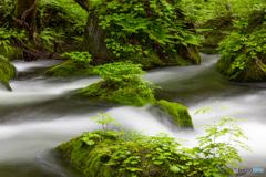 新緑の奥入瀬渓流-Ⅲ
