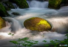 朝陽を受ける苔岩