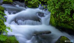 新緑の奥入瀬渓流2021