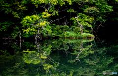蔦沼~reflection~
