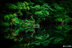 新緑の蔦沼-Ⅱ