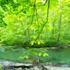 新緑の清流-Ⅲ