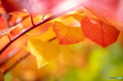 ちいさな秋の訪れ