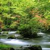 新緑の奥入瀬渓流2015