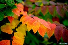 初秋の彩-Ⅱ