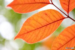 初秋の彩り-Ⅷ
