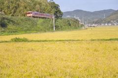 ver-15 国鉄色列車が通ります 稲刈りの頃