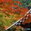 『 伸ばす秋色 』