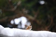 孤高の一羽