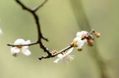 春はすぐそこに