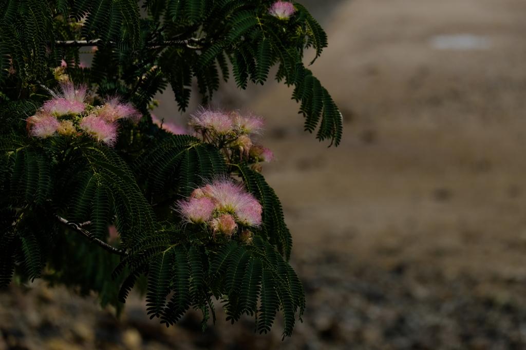 ネムの花 ⅱ