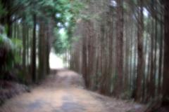 探索途上の杉林 壱