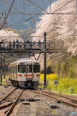 桜トンネルと御殿場線④