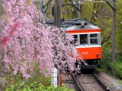 箱根登山の春2