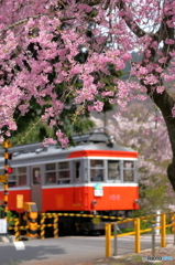 箱根登山の春1