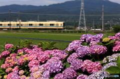 田園風景@小田急線2