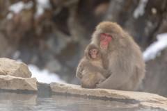温泉とニホンザル②