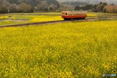菜の花畑と小湊鉄道①