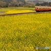 菜の花畑と小湊鉄道②
