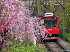 箱根登山の春3