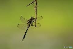 dragonfly_3