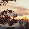 晩秋の彩り