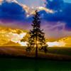 Fantastic X'mas Tree