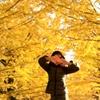『黄金色の光』2