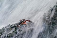 ザリガニの滝行