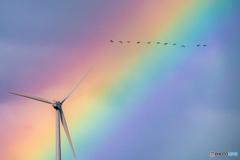 虹と風車とマガン