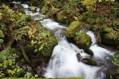 二ツ森渓流