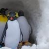 庭先ペンギン3