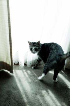 おちつきのない猫